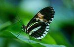 A otra cosa mariposa