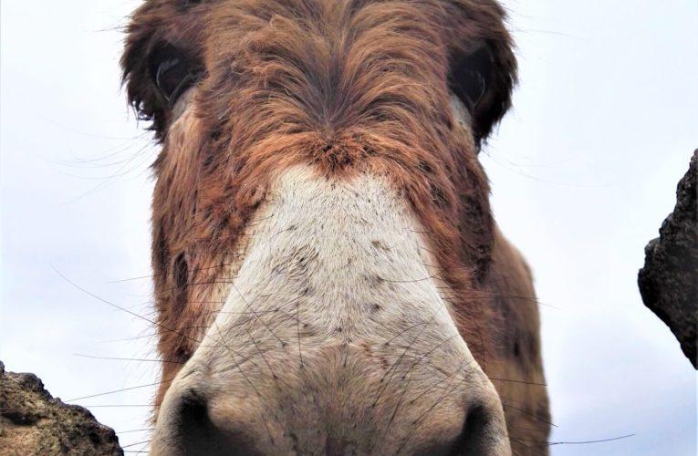 De burros y asnos