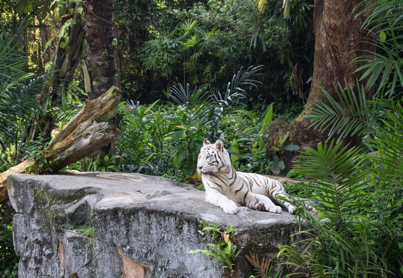 Journée au zoo de Singapour