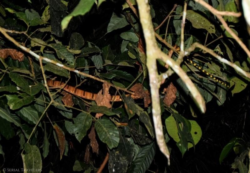 serial-travelers-malaisie-taman-negara-mat-leon-village-snake