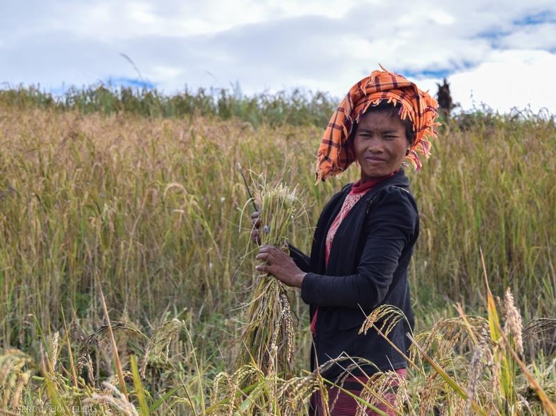 serial-travelers-myanmar-trek-kalaw-inle-sam-family-femme-champs