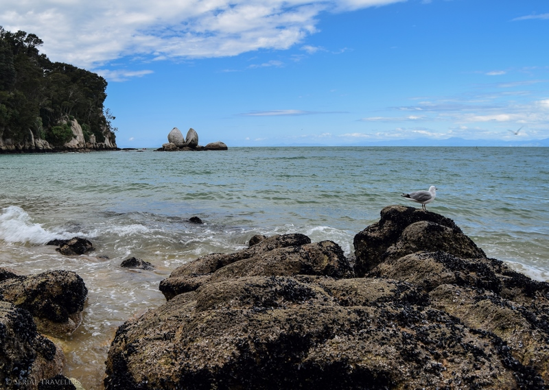 serial-travelers-nouvelle-zelande-roadtrip-randonnee-abel-tasman-apple-tree-2