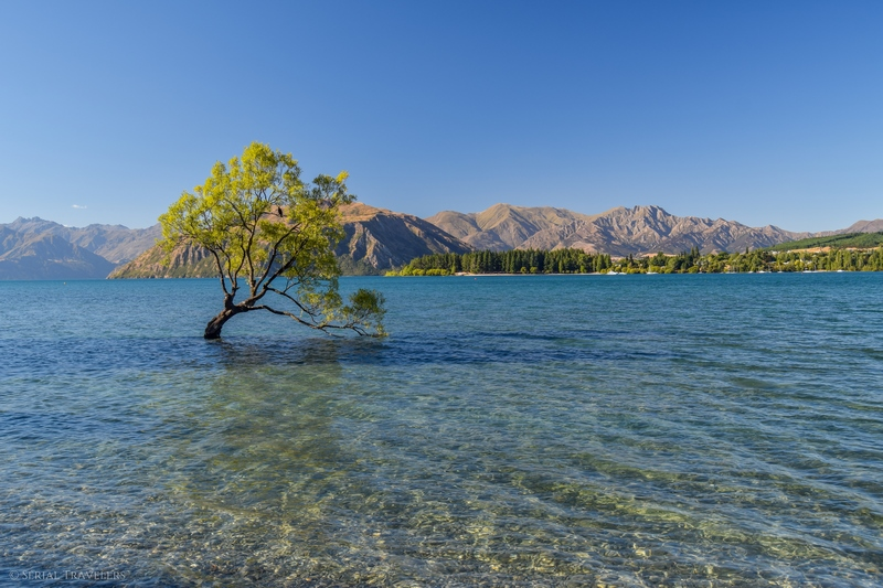 serial-travelers-nouvelle-zelande-that-wanaka-tree-lookout1