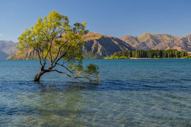 serial-travelers-nouvelle-zelande-that-wanaka-tree-lookout4