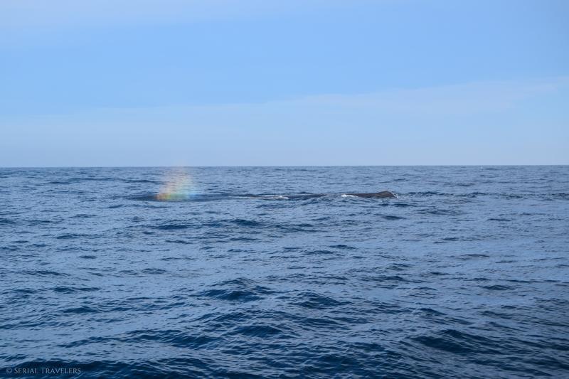 serial-travelers-nouvelle-zelande-kaikoura-whale-watch-cachalot-arc-en-ciel