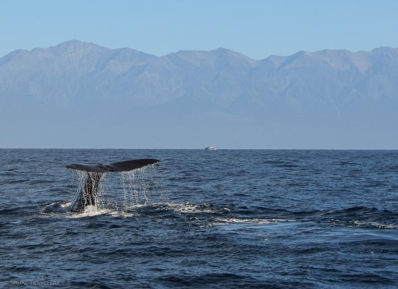 Croisière en haute-mer à Kaikoura à la recherche des baleines !