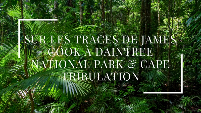 Sur les traces de James Cook à Daintree National Park & Cape Tribulation