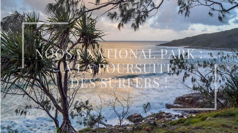 Noosa National Park : à la poursuite des surfers !