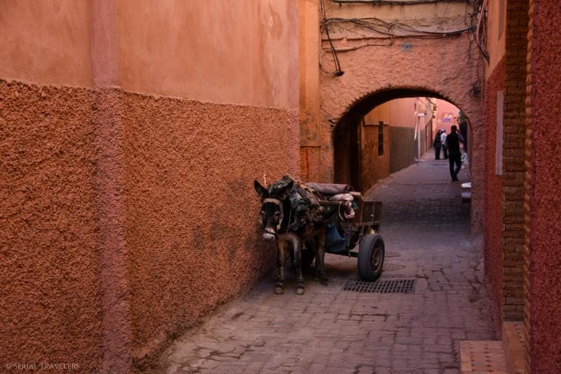 serial-travelers-marrakech-incontournables-médina1-âne