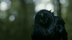 El cuervo de tres ojos