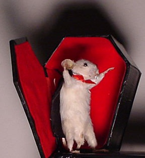 It's like that old children's story, If You Give a Mouse a Transfusion.