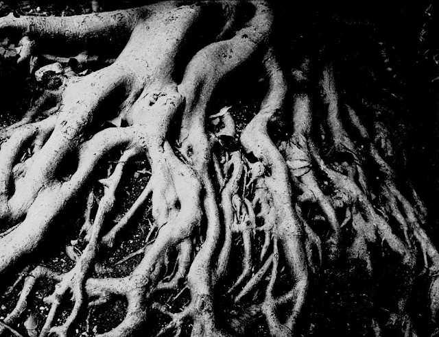 Gaaah!  Im Rooted!