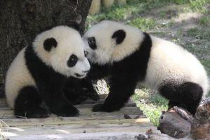 Planes en familia: Excursión al zoo