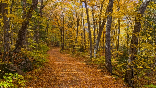 Fall Wallpaper Road Fall In The Michigan Woods Still Sd Amp Hd Vision 111