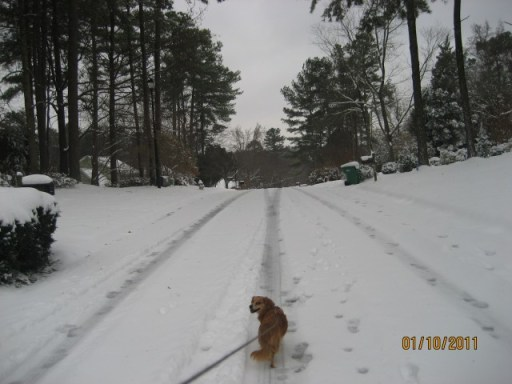 Walking Tobey on snow day 2011
