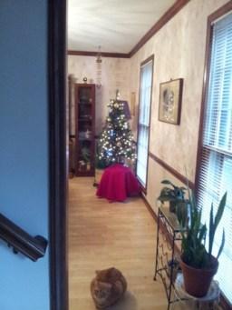 성탄절 불과 며칠 전에야 Christmas tree가..