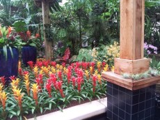 Fucua Orchid Center
