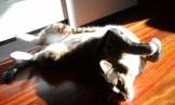 Maru tomando el sol