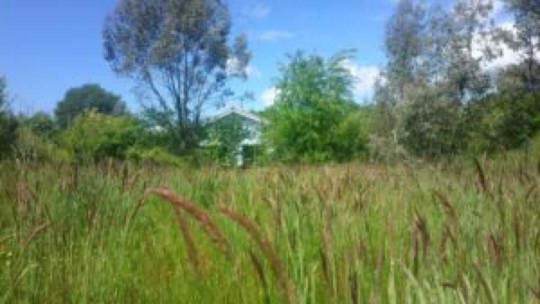 Prairie d'herbes folles à la serre o delices