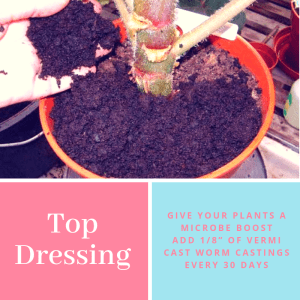"""Top Dressing Potted plants with 1/8""""/0.5cm every 30 days will provide a slow and constant release of nutrients."""