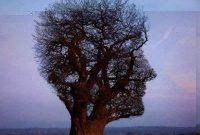 10 Pohon Dengan Bentuk Aneh dan Gokil