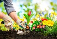Berkebun: Sehat Tubuhku, Lestari Lingkunganku