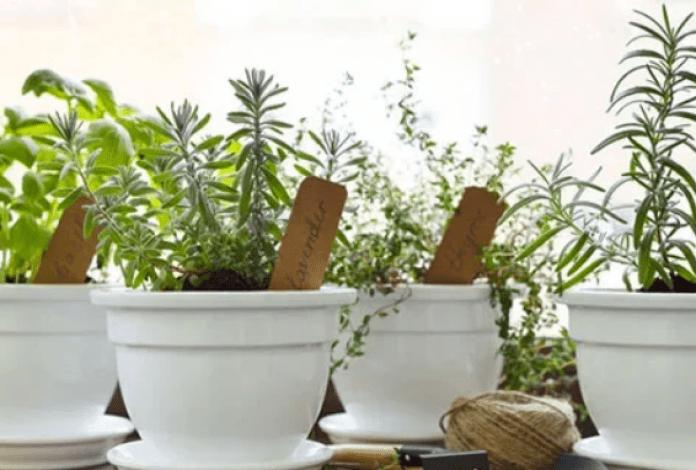 Tips dan Cara Bercocok Tanam di Rumah, Lebih Hemat dan Menguntungkan
