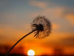 Hindari 10 Sifat Manusia yang Dibenci Allah