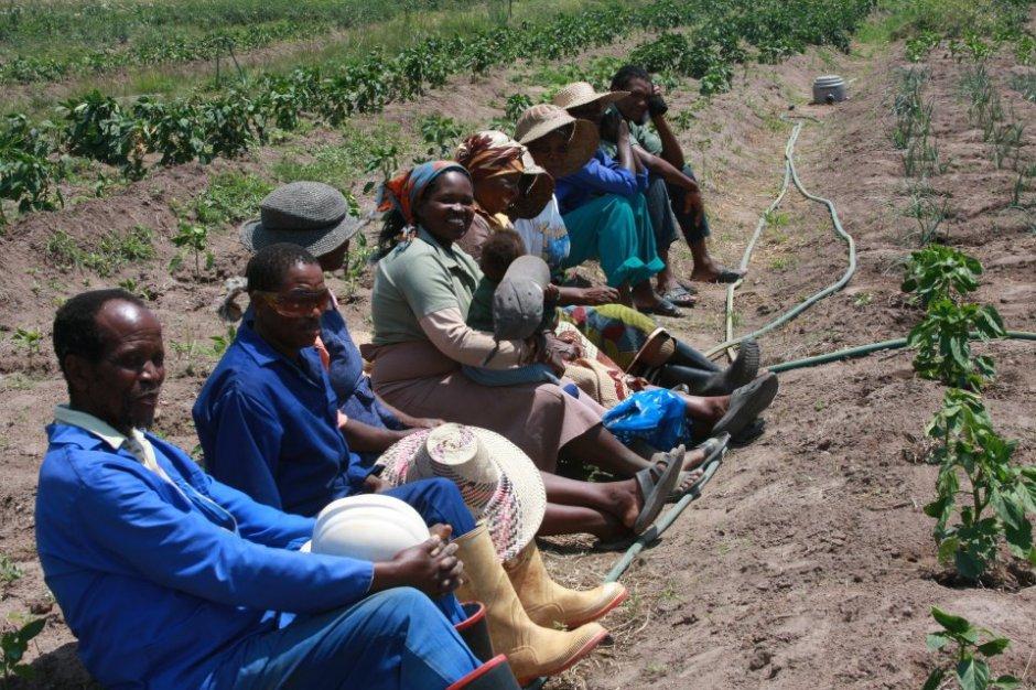 Luve Garden Project Gardeners