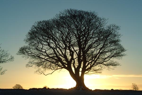 arbre-119