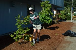 Landscaping at Periwinkle