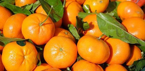 Necalificați la cules de mandarine în Italia
