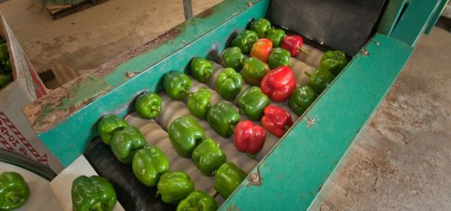 Depozit de legume