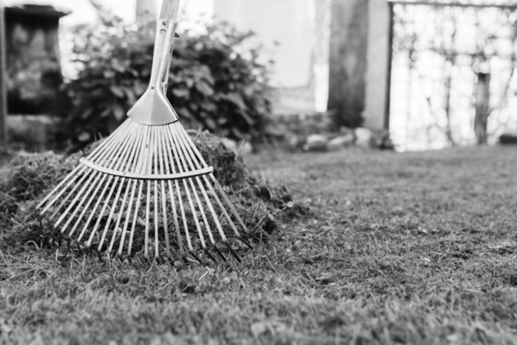 Tips on scarifying a lawn - SERV Plant Hire