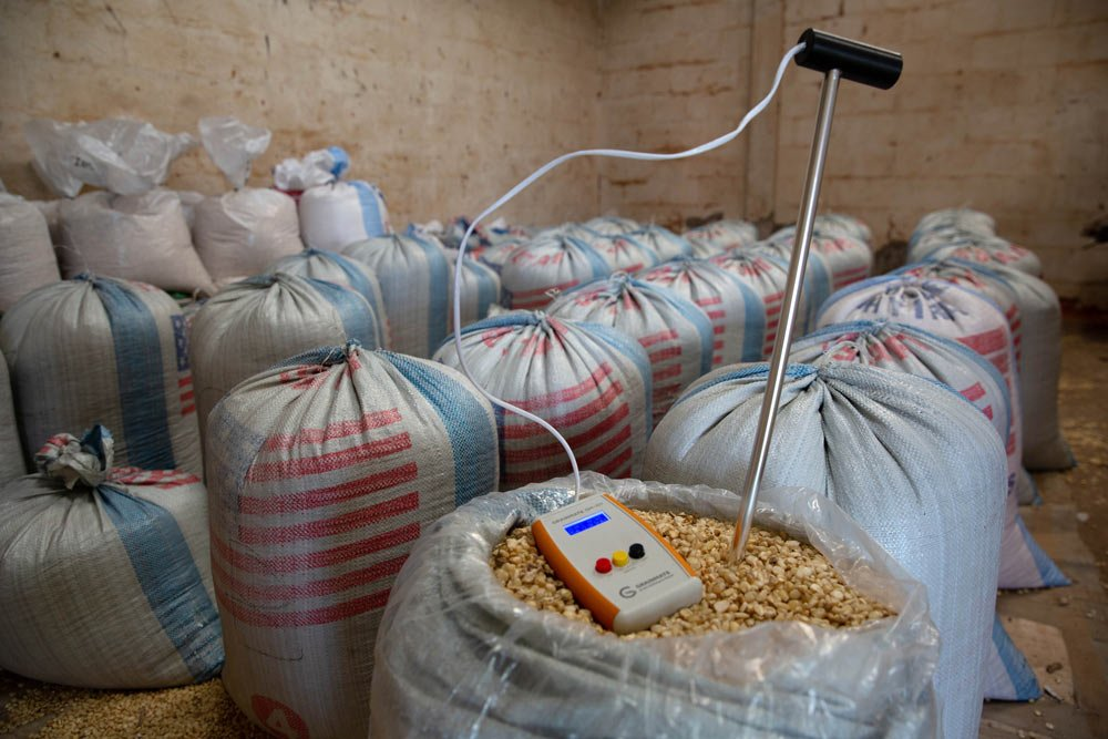 How To Reduce Post-Harvest Losses In Maize This Season