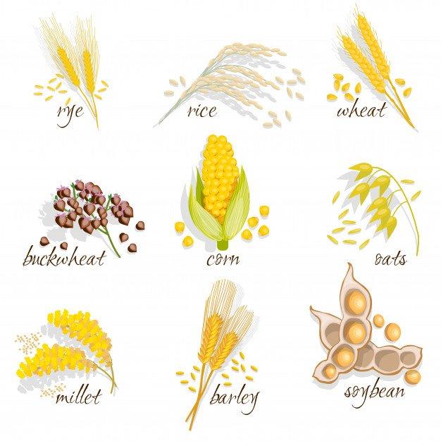 Understanding Post-harvest Loss In Grains