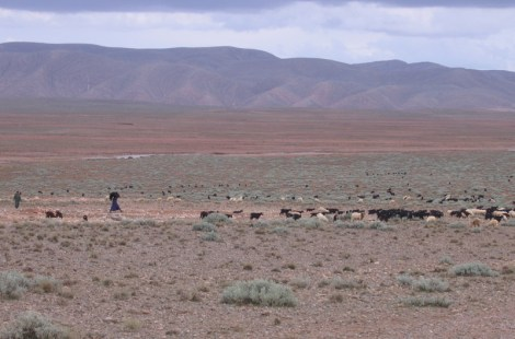 Livestock in the Southern High Atlas Mountains, Morocco, 2008