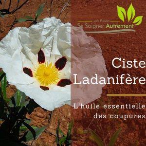 Ciste Ladanifère, l'huile essentielle des coupures