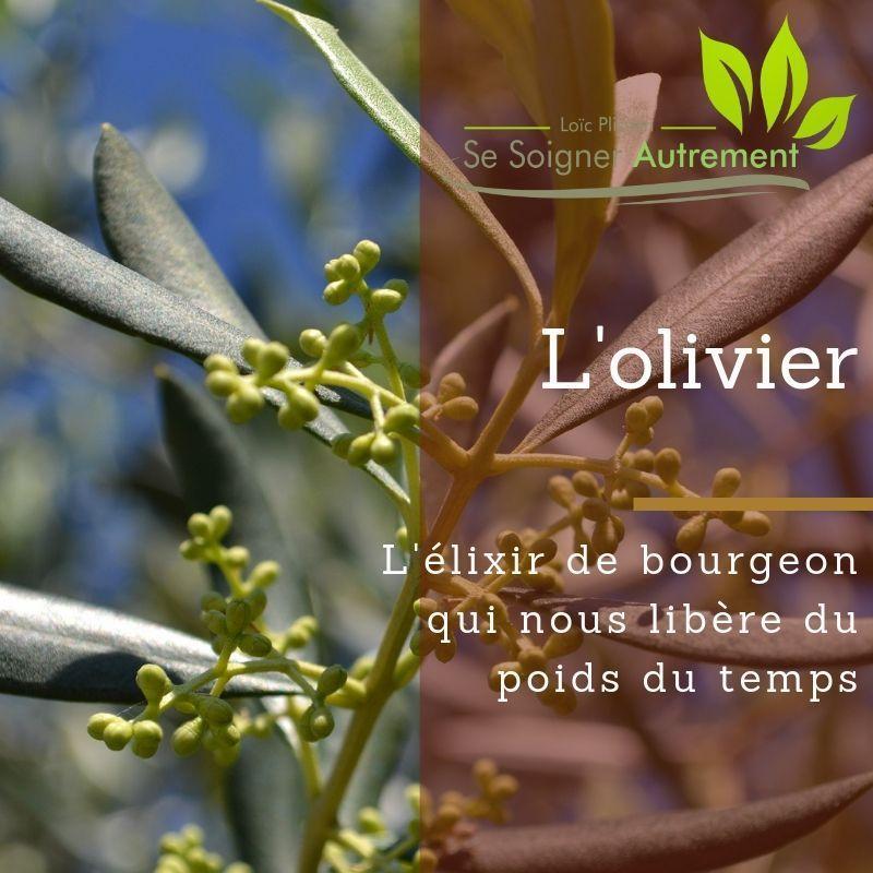 L'élixir de bourgeon d'olivier nous libère du poids du temps