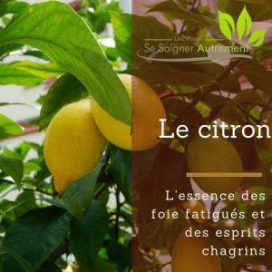 Fiche solution-phyto #52 – Essence de Citron