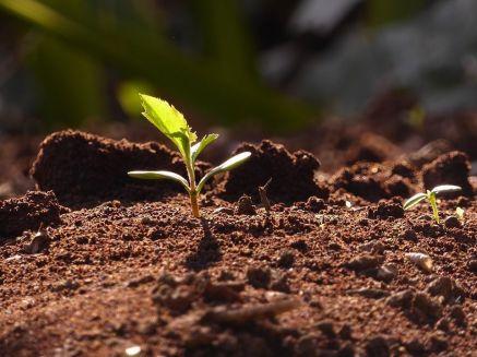 Prendre soin de la Terre et vivre en harmonie avec elle