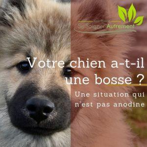 Votre chien a-t-il une bosse ?