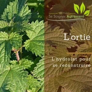 Fiche solution-phyto #19 – Hydrolat d'ortie