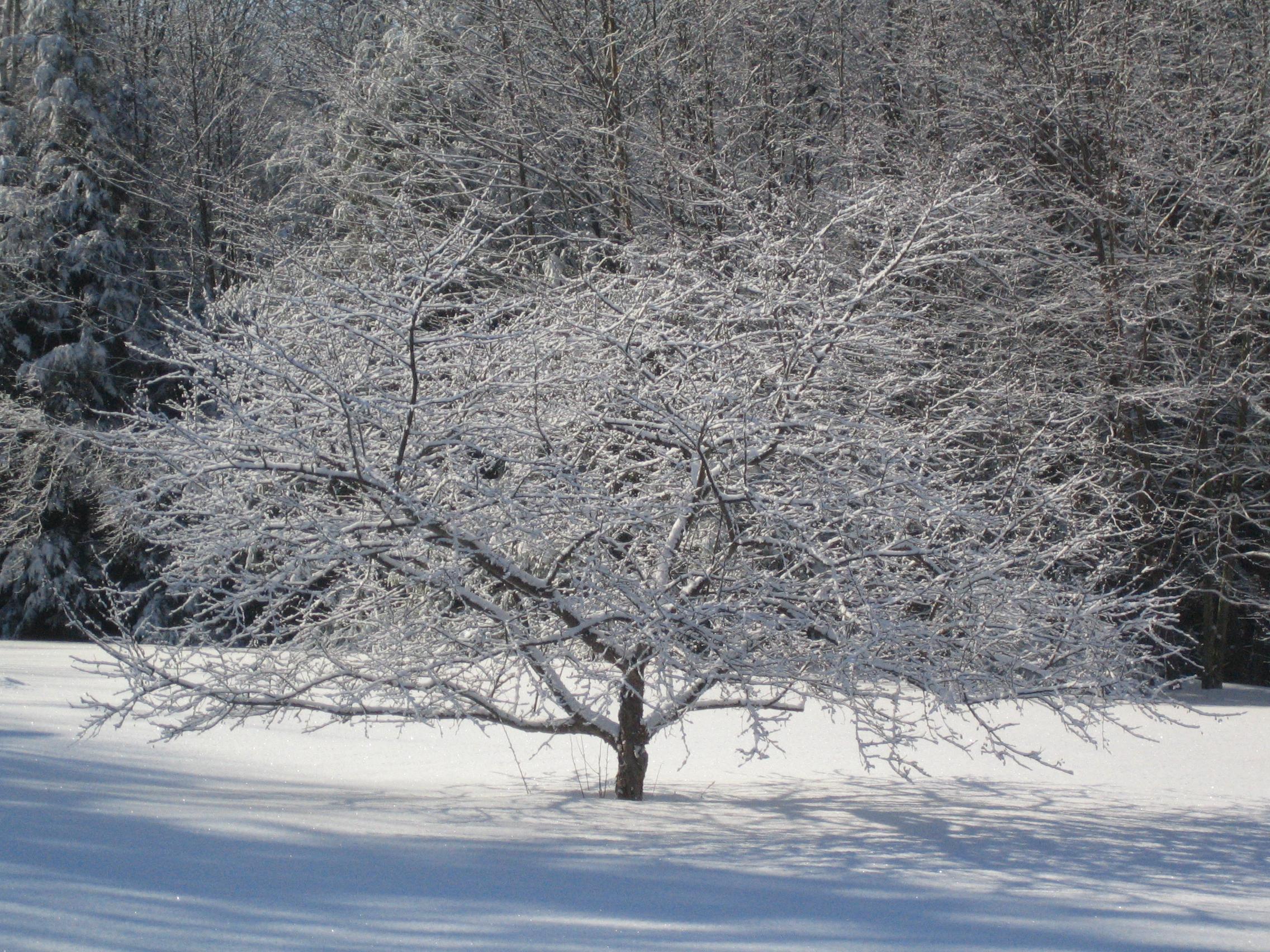 Vermont Winter Photos