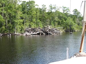 Snag pile on the Alligator-Pungo Canal
