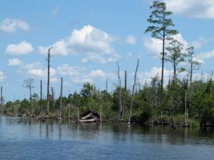Scenery on the Alligator-Pungo Canal