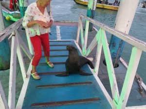 Sea lion on the gangway