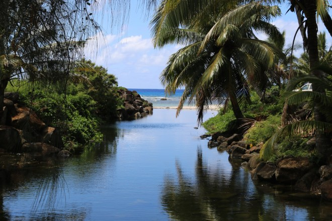Rarotonga Palms