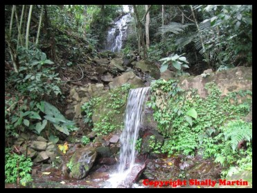 water fall capture in landscape style