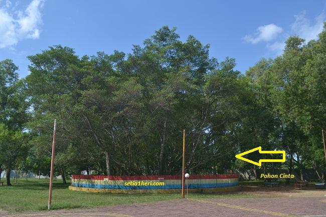 pohon cinta di tengah pulau kemaro sungai musi palembang
